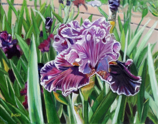 Bed of Purple Iris